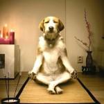 meditating-dog2