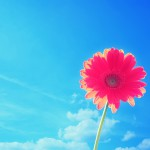 Nature-Wallpaper-flower-sky-summer
