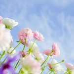 Soft_focus_sweet_flowers_JK127_350A