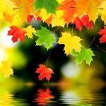 various_autumn-5615-2560x1600