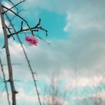 20160302最後に、咲く。