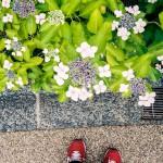th_20160616花と足元