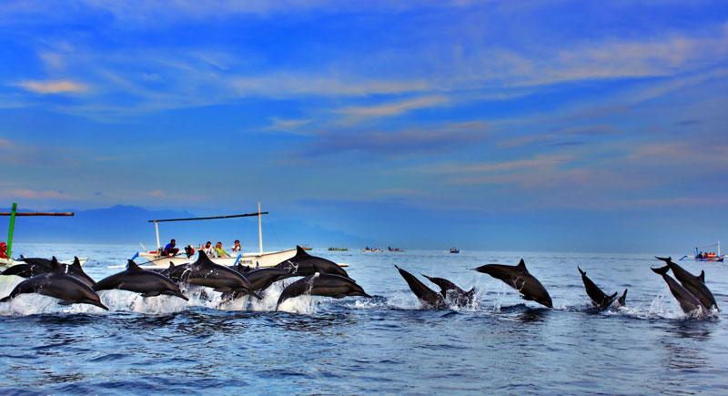 dolphins-lovina